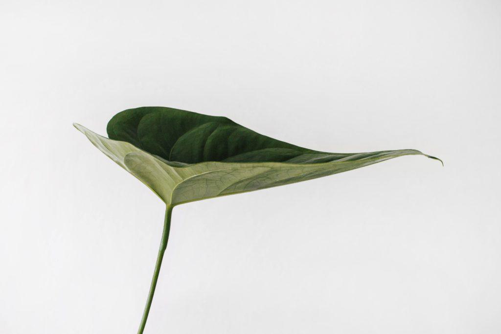 Minimalist leaf